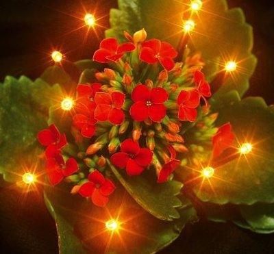 Flower light / 10 LED's